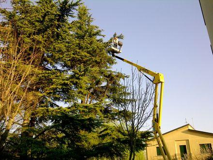 Vivaio piante forestali Veneto