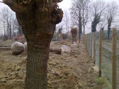 Mogliano Veneto-20111224-00065 2