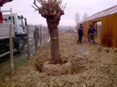 Mogliano Veneto-20111224-00066
