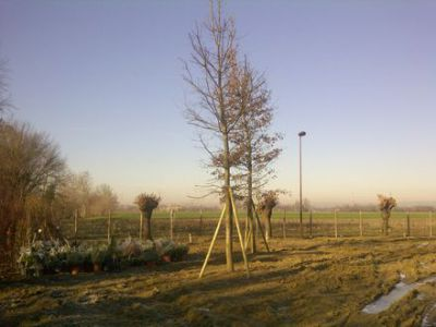 Mogliano Veneto-20120110-00083 2